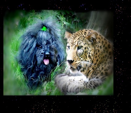 COMMABDER RALPH AND AMUR LEOPARD
